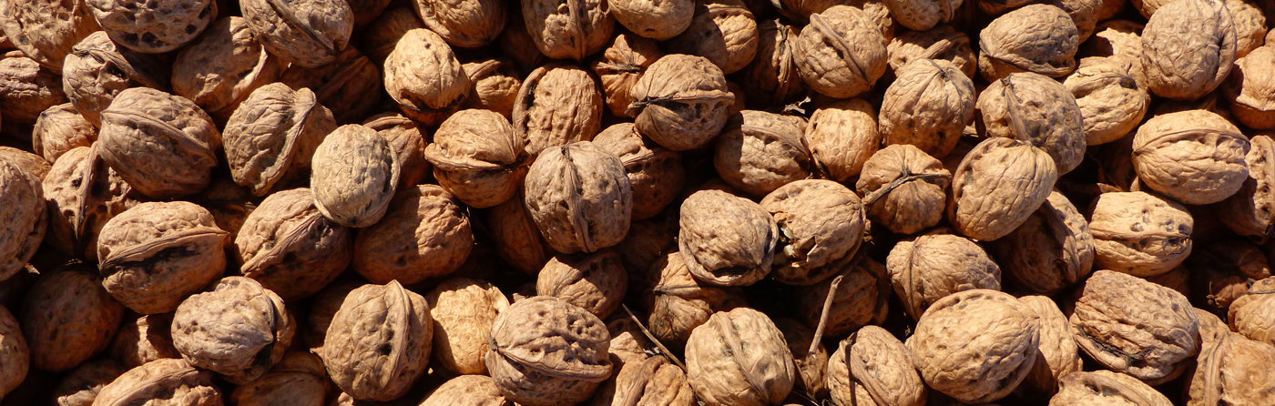 Churke Nut Export